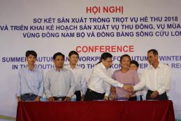 Các tỉnh Nam Bộ trúng mùa, được giá lúa vụ Hè Thu
