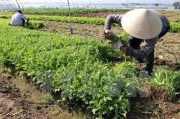Hình thành nhiều vùng nông nghiệp chuyên canh cho thu nhập cao