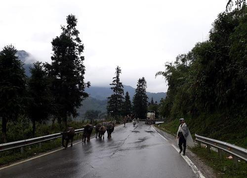 Dọc tuyến Quốc lộ 4D (từ Sa Pa đi Lào Cai). Ảnh Hương Thu - TTXVN