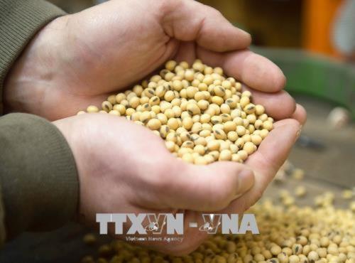 Dịch COVID-19: Colombia miễn thuế nhập khẩu 3 loại ngũ cốc