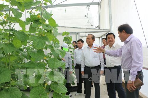 Phó Thủ tướng Trương Hòa Bình tham quan mô hình trồng dưa công nghệ cao ở Long An