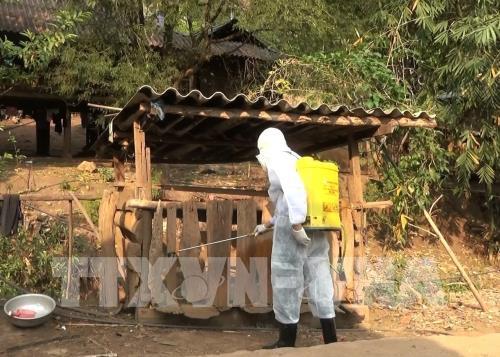 Công tác phun phòng, tiêu độc khử trùng tại chuồng trại chăn nuôi lợn ở các bản làng vùng sâu, vùng xa. Ảnh: Xuân Tiến - TTXVN