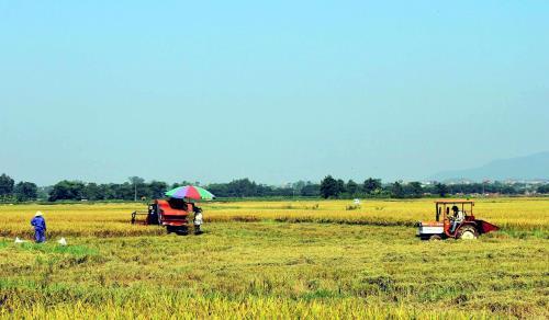 Tạo không gian để cơ giới hóa đồng bộ trong sản xuất nông nghiệp