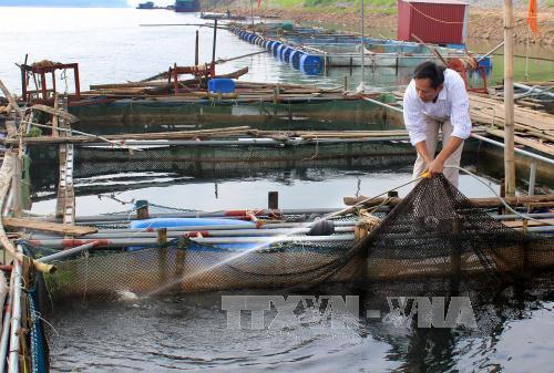 Nghề nuôi trồng thủy sản ở được coi là một trong 6 chương trình nông nghiệp trọng điểm của tỉnh Phú Thọ. Ảnh minh họa: TTXVN
