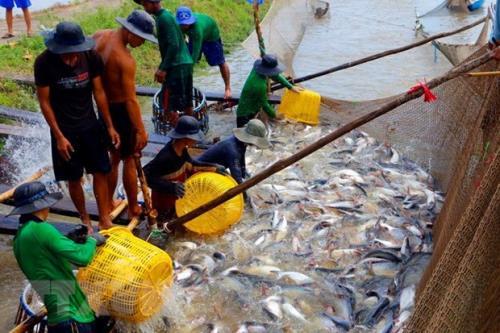Nghề nuôi trồng thủy sản đã trở thành hướng đi thoát nghèo, làm giàu của nhiều địa phương ở Phú Thọ. Ảnh minh họa: TTXVN