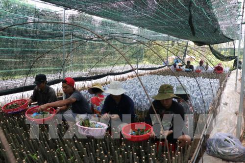Đề xuất quy định mới về sản xuất, kinh doanh giống cây trồng lâm nghiệp