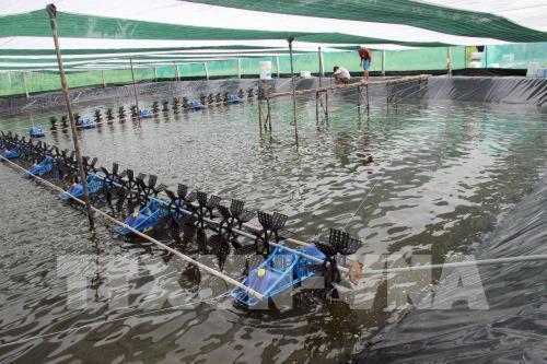 Cà Mau thí điểm nuôi tôm sạch theo tiêu chuẩn của Tổ chức Seafood