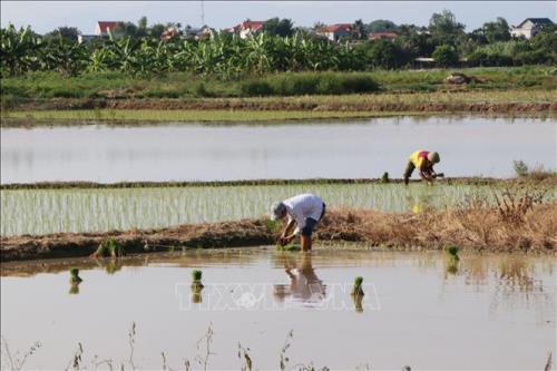 Thay đổi tư duy nông nghiệp để hạn chế bỏ ruộng