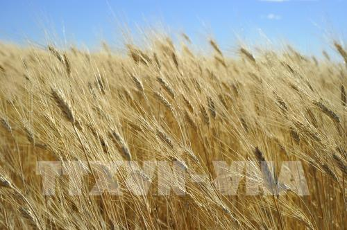 Trung Quốc hạn chế nhập khẩu một số nông sản của Mỹ