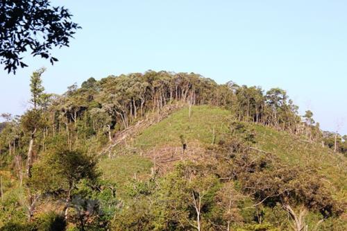 Thực hiện đóng cửa rừng tự nhiên: Bài 4-Sử dụng đúng mục đích quỹ đất nông lâm trường