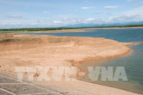 Dự kiến điều chỉnh sản xuất hàng chục nghìn ha ở Nam Trung bộ do hạn hán