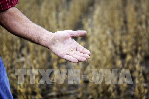 Brazil cân nhắc tạm thời dỡ bỏ thuế nhập khẩu đối với một số nông sản