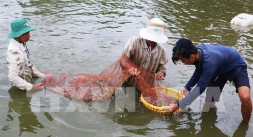 Nghề nuôi thủy sản mặn, lợ bội thu