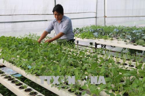 Giải pháp nào để khuyến khích nông nghiệp công nghệ cao?