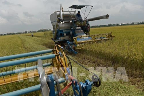 Thái Lan điều chỉnh chiến lược lúa gạo để tăng tính cạnh tranh