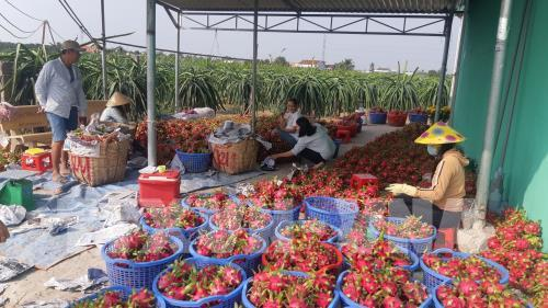 Xuất khẩu rau quả tăng trưởng ở các thị trường chất lượng cao