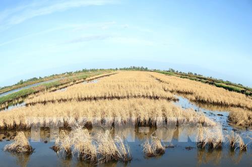Đồng bằng sông Cửu Long: Xâm nhập mặn đạt cao nhất từ ngày 8-13/4