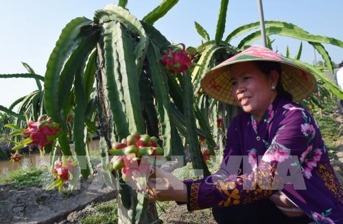 Vĩnh Phúc đẩy mạnh ứng dụng khoa học kỹ thuật vào sản xuất nông nghiệp
