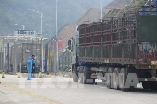 Dịch COVID-19: Xuất nhập khẩu hàng hóa vẫn ưu tiên cho phòng chống dịch