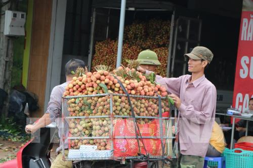 Tháo gỡ khó khăn để thúc đẩy xuất khẩu quả vải tươi sang Nhật Bản