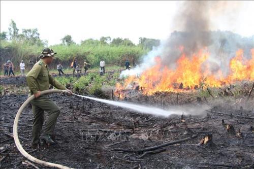 Rà soát các phương án phòng cháy, chữa cháy rừng