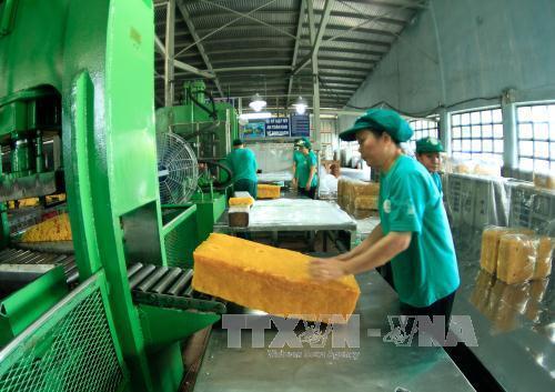 Cao su Việt Nam đối mặt với sức ép từ cằng thằng thương mại  Mỹ - Trung Quốc