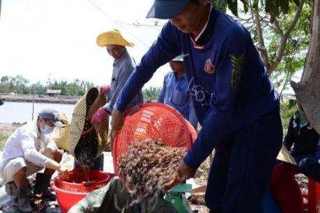 Mỹ hạ thuế chống bán phá giá đối với tôm Việt