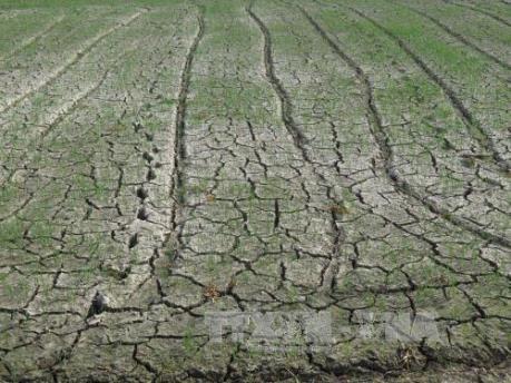 Bắc Bộ và Tây Nguyên đối mặt với nguy cơ hạn hán vì El Nino