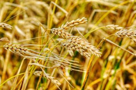 15 quốc gia EU tham gia luật cấm nông sản biến đổi gien