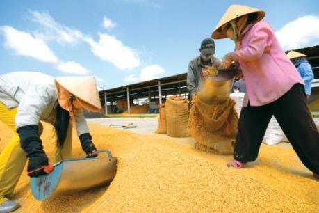 Xuất khẩu gạo có dấu hiệu phục hồi