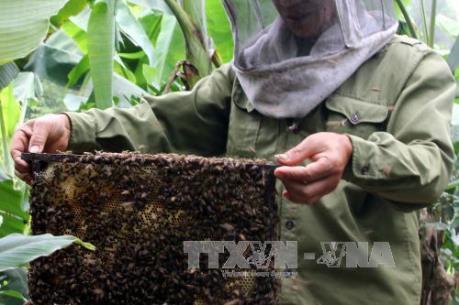 Cảnh báo về chất lượng của mật ong rừng tràm U Minh Hạ