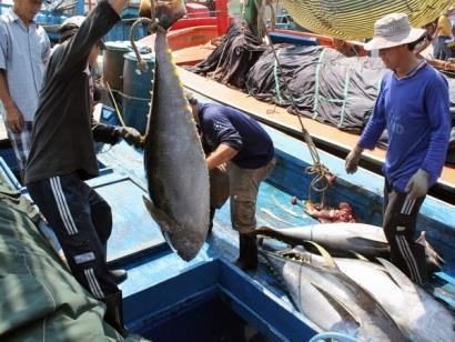 Chuyên gia Nhật Bản cùng ngư dân Bình Định ra khơi