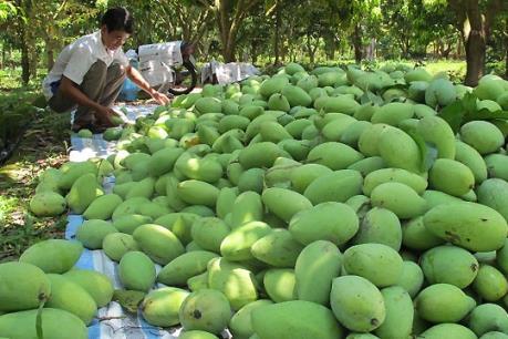 Xoài Việt thâm nhập thị trường Nhật Bản