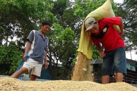 Không đề xuất thu mua tạm trữ gạo trong vụ Đông Xuân 2015-2016