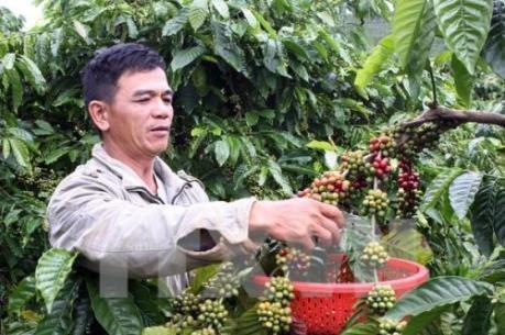 Khuyến cáo không trộn lẫn cà phê cũ với cà phê mới xuất bán