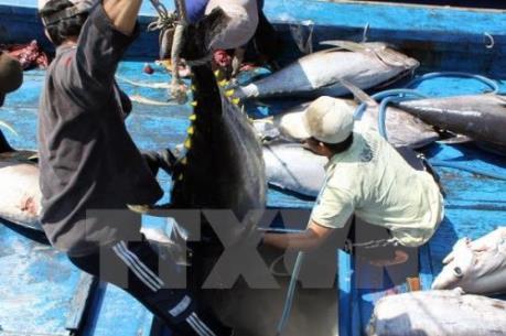 Thu hút nguồn vốn tư nhân đầu tư vào các trung tâm nghề cá lớn