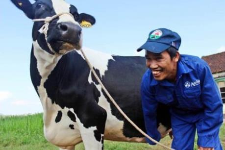 Công ty bò sữa Mộc Châu tăng quy mô sản xuất