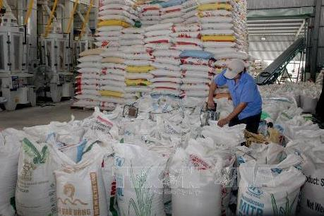 Thị trường ngách: Điểm đến của hạt gạo Việt Nam
