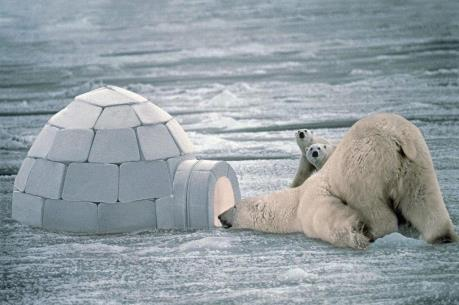 Mỹ, Nhật thăm dò và khai thác tài nguyên ở Bắc Cực
