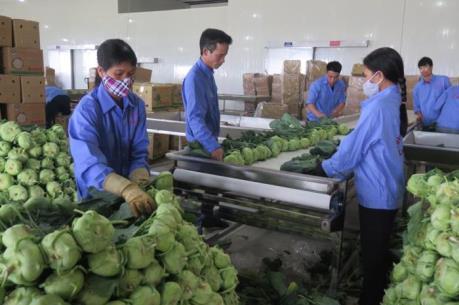 Khánh thành Nhà máy sơ chế rau củ quả quy mô lớn đầu tiên tại Hải Dương