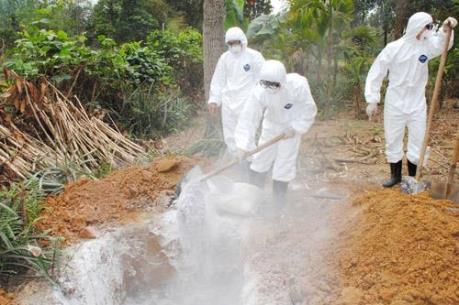 Dập ổ dịch cúm gia cầm H5N6