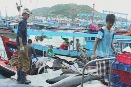 Hỗ trợ kinh phí mua bảo hiểm cho 27 chủ tàu cá