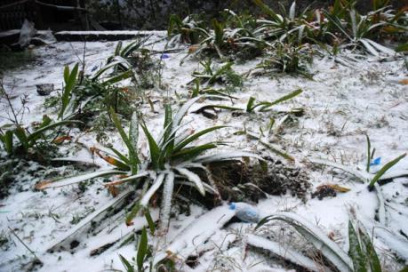 Đêm 24/1, vùng núi cao tiếp tục có mưa tuyết và băng giá, nền nhiệt dưới 0 độ C