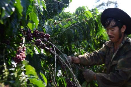 Những điều có thể bạn chưa biết về cà phê Buôn Ma Thuột
