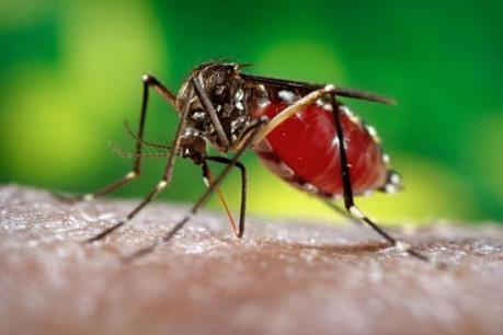 TP Hồ Chí Minh chủ động ứng phó với dịch bệnh do virus Zika