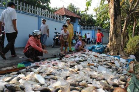 Xử lý hiện tượng cá chết bất thường tại các tỉnh ven biển Bắc Trung Bộ