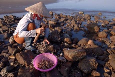 Nhọc nhằn nghề đập don biển tại Nam Định