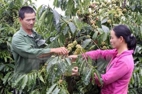 Lâm Đồng thay đổi cơ cấu cây trồng vật nuôi để tạo bứt phá
