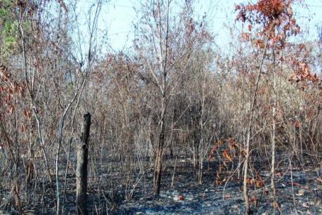 """Mưa """"vàng"""" cứu nguy cho những cánh rừng khô cháy tại Điện Biên"""