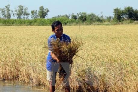Biến đổi khí hậu: Độ mặn ở khu vực Nam Bộ sẽ tăng trở lại